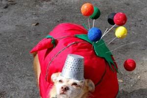 Los perros también celebran Halloween