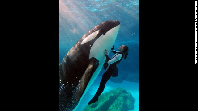 SeaWorld is appealing a ban instituted by the Occupational Safety and Health Administration restricting how humans interact with killer whales during performances.