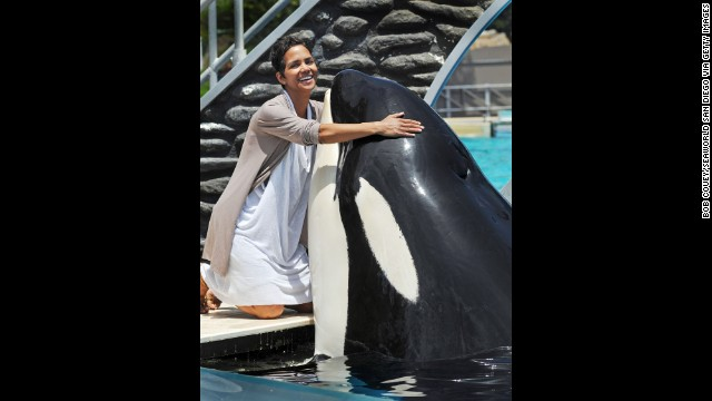 Incidents At Seaworld Parks: Noti Casi De Todo: Filmmaker: Why I Made 'Blackfish
