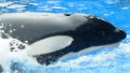 'Blackfish' and the zoo debate