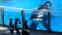 California bill would ban orca shows at SeaWorld