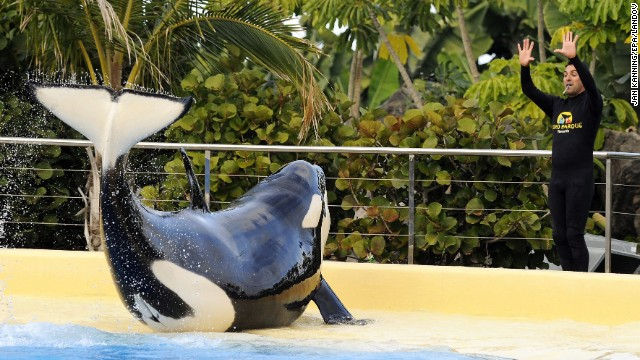 In Puerto de la Cruz on the Spanish resort island of Tenerife, Loro Parque (#3 on the top zoos list) has been home to killer whales.