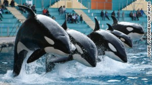 Could marine theme parks transform into orca sanctuaries?