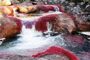 11. Caño Cristales (Colombia)