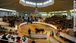 Galileo's daughter brings record for yearling filly