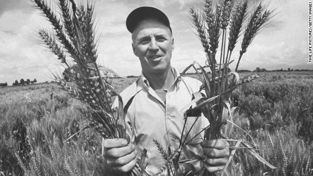 Dr. Norman Borlaug holds up stalks of his specifically crossbred wheat, designed to be more disease resistant. Borlaug won the Nobel Peace Prize in 1970.