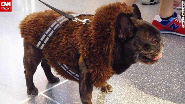 "Even canines get into the action. This dog is cosplaying as <a href='http://instagram.com/p/famXTSiDH8/' target='_blank'>Chewbacca</a> from ""Star Wars."""