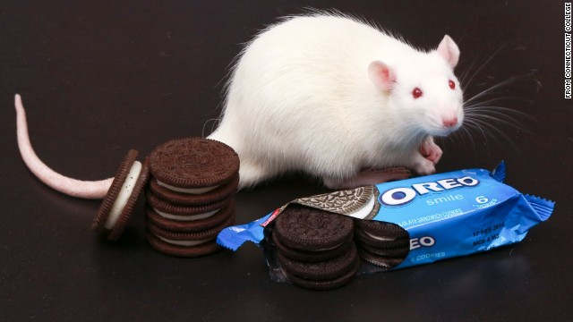 Oreos' surprise twist? As 'addictive' as cocaine, study finds