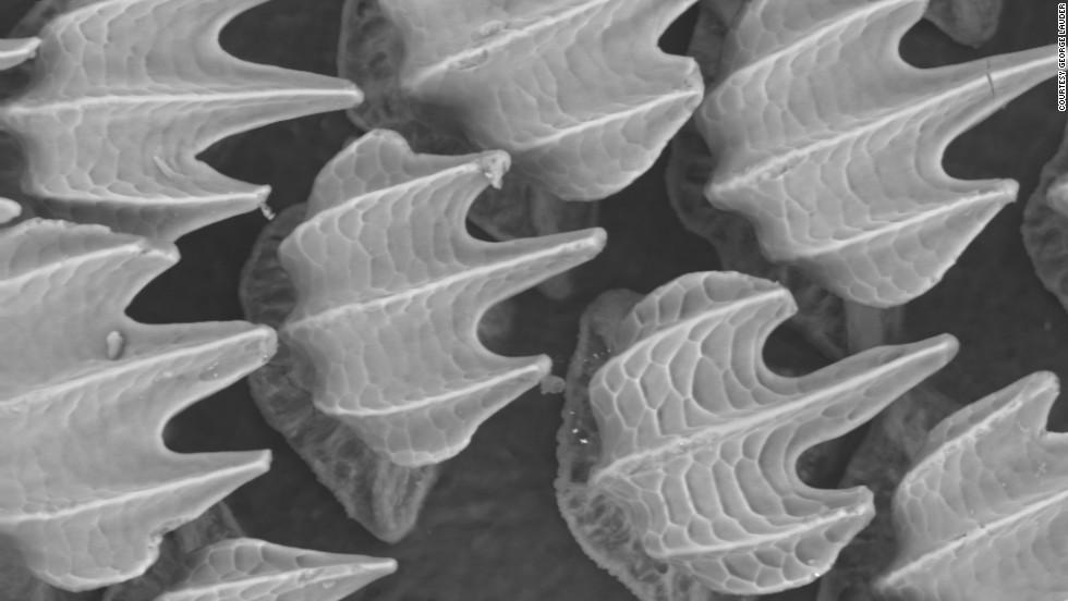 'Piel' antibacterial