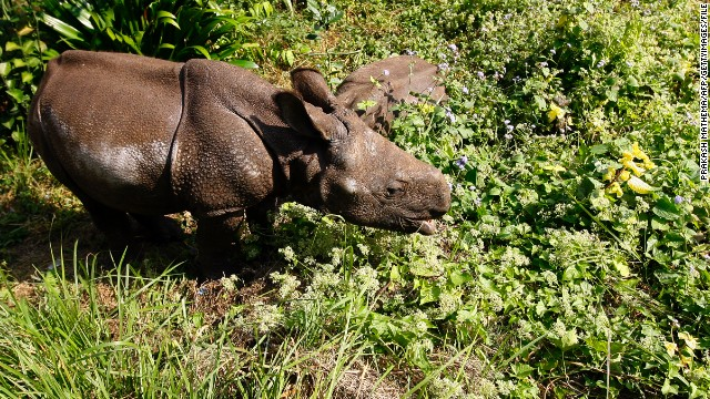 Efforts to protect four of the world's last remaining northern white rhinos have been boosted by a $70,000 drone. The <a href='http://www.olpejetaconservancy.org/' target='_blank'>Ol Pejeta Conservacy</a> in Kenya is planning to use the UAV to monitor the location of its wildlife and deter poachers from harming the animals.