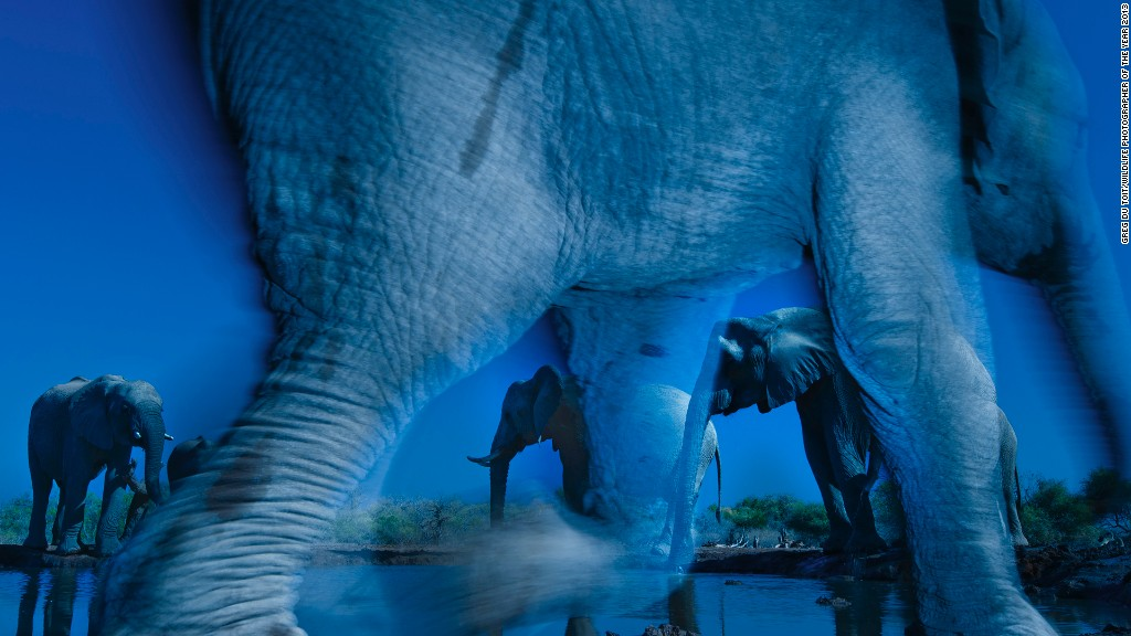 "The winners of the Wildlife Photographer of the Year have been announced. The annual competition, co-owned by the <a href='http://www.nhm.ac.uk/index.html' target='_blank'>Natural History Museum</a> and BBC Worldwide, picks the best wildlife photos around the world ""for their creativity, artistry and technical complexity.""<!-- --> </br>More than 100 photos will be on display at London's Natural History Museum from 18 October, 2013-23 March, 2014, before embarking an international tour. <!-- --> </br><!-- --> </br><strong>Wildlife Photographer of the Year</strong><!-- --> </br>Greg du Toit (South Africa)<!-- --> </br><i>Essence of elephants</i><!-- --> </br>South African photographer Greg du Toit beats almost 43,000 entries to become the Wildlife Photographer of the Year 2013 for his photo ""Essence of elephants.""<!-- --> </br>""Greg's image immediately catapults us to African plains,"" said Jim Brandenburg, the chair of the judging panel. ""This image stood out for both its technical excellence and the unique moment it captures -- it is truly a once in a lifetime shot.""<!-- --> </br>Du Toit's shot was taken in the Northern Tuli Game Reserve in Botswana after spending a decade on a quest to perfect the shot of an elephant herd.<!-- --> </br><!-- --> </br><i>photo courtesy Greg du Toit/Wildlife Photographer of the Year 2013</i>"
