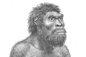 Importante descubrimiento de cráneo ancestral