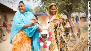 Sabina Begam (left) passes on the gift of a heifer to Malati Hassada in Holdibona, Bhashopada, Bangladesh