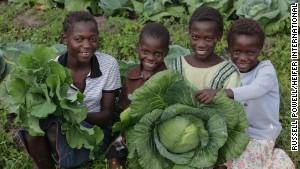 Gladis Yenesha, Frank Lungo, Latisha Yenesha and Edwina Yenesha harvest cabbage in Mutundu North Village, Zambia
