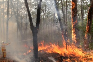 Devastadores incendios en Australia