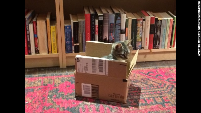 Arthur demonstrates cats' well-known love of empty boxes at home in Brooklyn Heights.