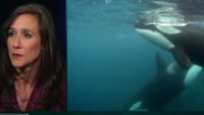 """Blackfish"" filmmaker: I didn't come from animal activism"