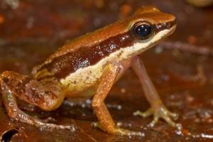 Nuevas especies en la Amazonia