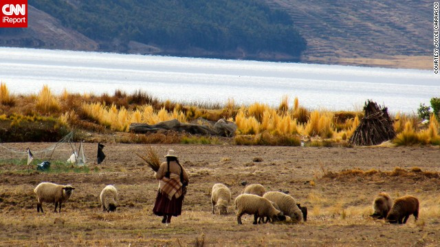 A Bolivian woman tends to her sheep in the small community of Sicuani.