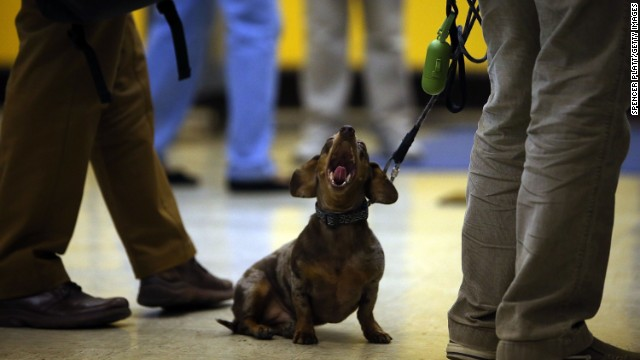 A dog yawns while waiting for its owner to vote in Brooklyn.