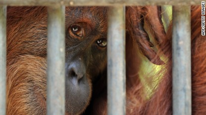 Are animals in cages a necessary evil?