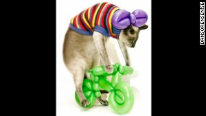 Gucci the cat rides a balloon bike made by Katja Wulff. You\'re welcome.