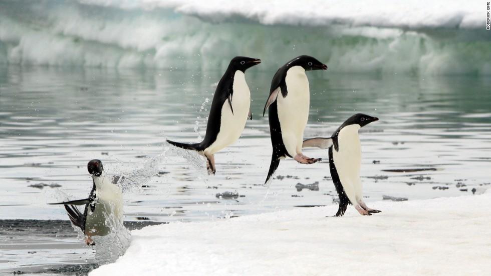 4. Siguiendo los pasos de Scott, Amundsen, Antártica