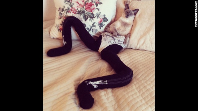 Katja Wulff and her boyfriend Dan Sörensen of Gothenburg, Sweden started the Meowtfit blog on tumblr.. It's photos of their cat, Gucci, wearing tights. And it's amazing.