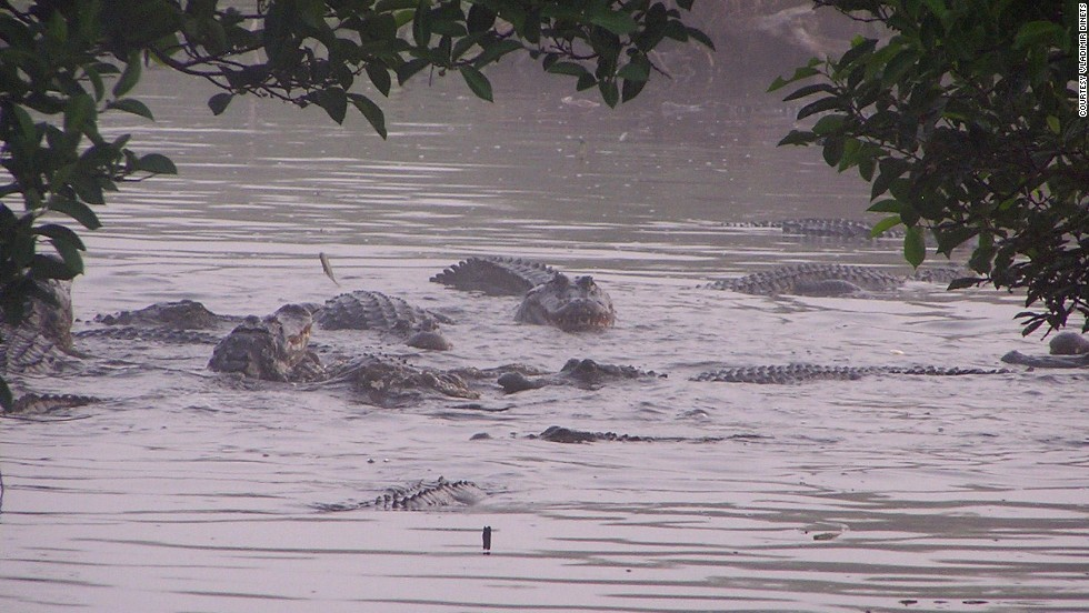 Parque Nacional Everglades, Florida, EE.UU.
