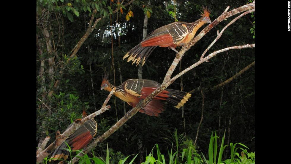Rancho Karanambu, Guyana
