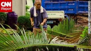 Typhoon Haiyan's impact