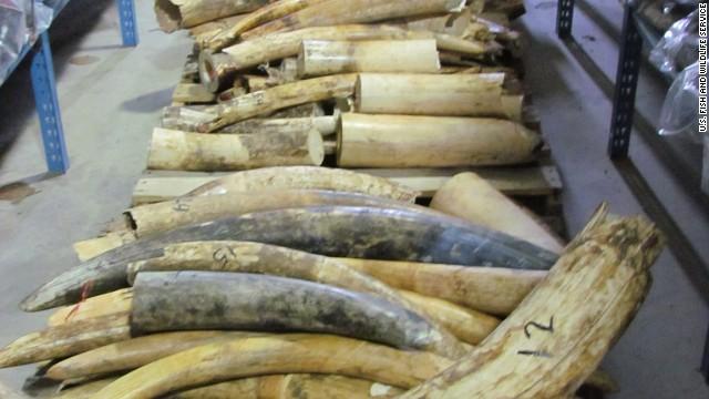 EE.UU. ofrece un millón de dólares para detener a los traficantes de marfil