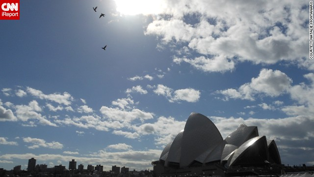 Birds take flight above a silhouetted Sydney, including the famed Sydney Opera House.