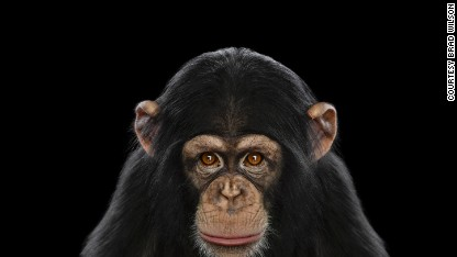 Courts: Chimps are not people