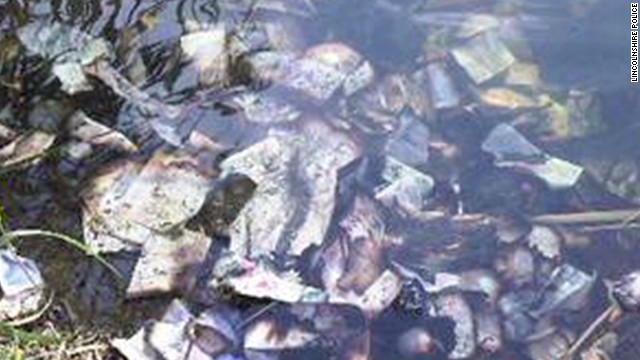 Un hombre encuentra 100 mil dólares flotando en un río