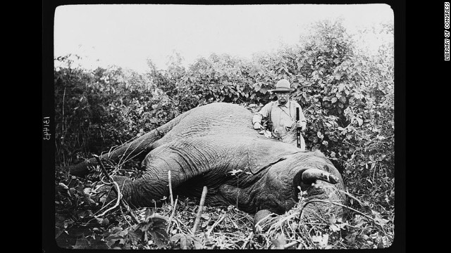 Theodore Roosevelt, possibly the most famous sportsman to occupy the White House, continued to hunt after leaving office. In 1909, with the backing of the Smithsonian Institution, Roosevelt went on a yearlong safari that killed or trapped more than 11,000 animals.
