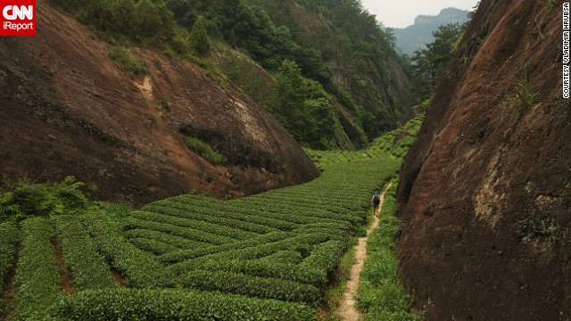 Tea plants cover a mountainside in China's Fujian province. Vladimir Hrubsa captured this photo while traveling through China on a quest to find the perfect cup of tea. Read more about his journey and see additional photos on CNN iReport.