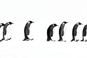"""La extensa marcha"" - Cerro Nevado, Antártida"