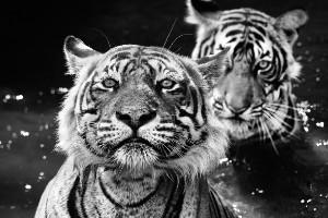 """Historias del libro de la selva"" - India"