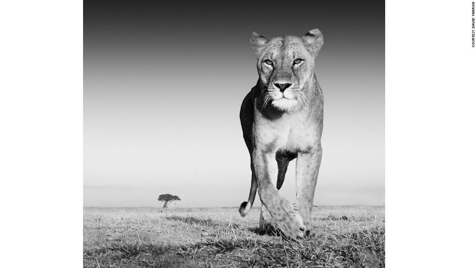 """""""El premio"""" - Ambroseli, Kenia"""