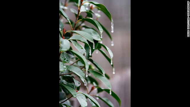 Icicles form on a bush after the first round of winter weather moved through Tarrant County, Texas, on November 24.