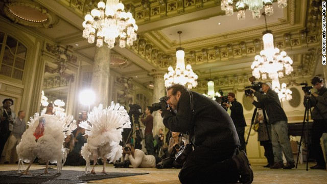 Official White House turkeys make media debut