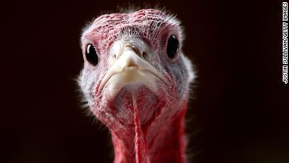 Obama grants two turkeys 'amnesty'