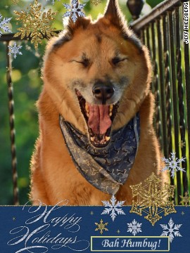 The Hielsbergs' 2013 holiday card, featuring Dooz.
