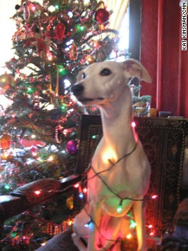 Kat Kinsman's whippet, Morgane, dons string lights for a 2008 holiday portrait. Morgane is always oddly calm for pictures and seems to know she has no bad angles, Kinsman said.
