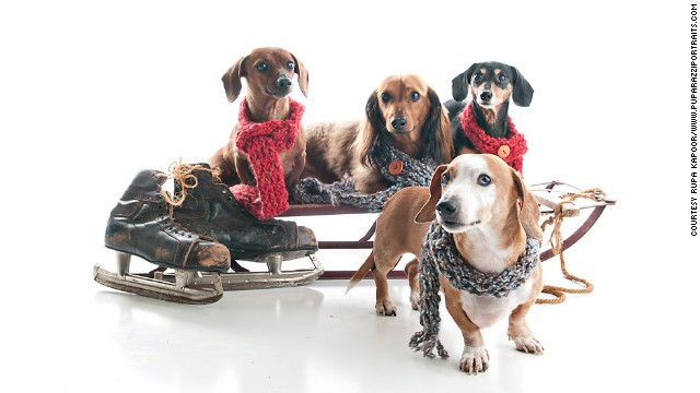 Rupa Kapoor photographed a family of Dachshunds at her <a href='http://www.puparazziportraits.com/' target='_blank'>Puparazzi Portraits</a> studio, where this sled is a recurring holiday prop.
