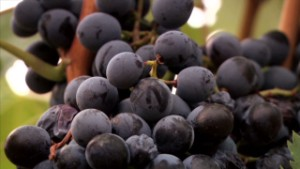 Spain's wine producer targets overseas market