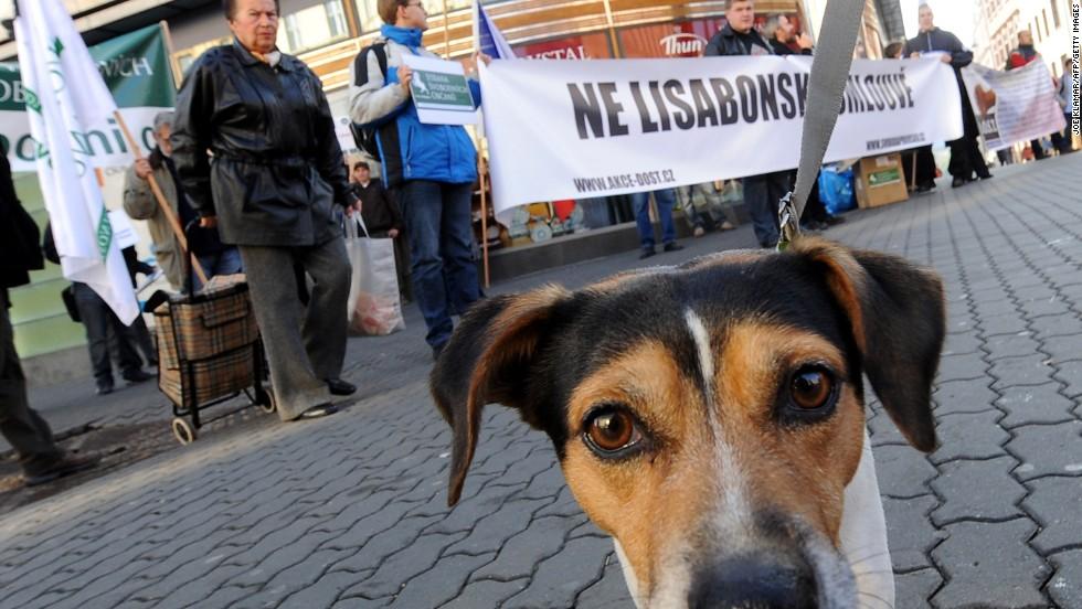 Desde Lisboa, con amor... para los perros