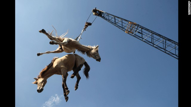 <strong>February 8:</strong> Horses are hoisted in the air by a crane as they are transferred from a cargo ship onto a truck in Surabaya, Indonesia.