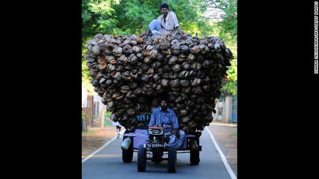 <strong>November 18:</strong> Tamil farmers transport coconut husks in Jaffna, Sri Lanka.